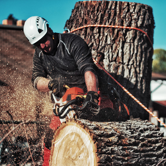 tree service from Utah Trees & Landscaping